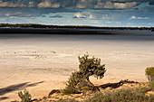 Tree at the shores of Goog's Lake, a salt lake, Goog's Track, Australia, South Australia