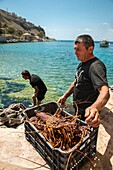 fishermen landing freshly caught lobster at Limeni, on the Mani peninsular Laconia, Southern Peloponnese, Greece