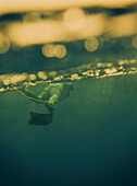 A spear fisher dives just below the surface of sea water with his spear gun.