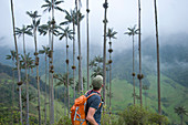 The Cocora valley stretches east of Salento into the lower reaches of Los Nevados, Zona Cafetera, Colombia, South America