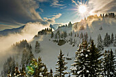 Wintry panoramic view of the Alps and fir trees, Flaine, France