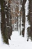 Alley in winter, Kottmüller-Allee, Murnau, Upper Bavaria, Germany