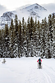 Female cross country skier on groomed trail with snow covered trees, Lake Louise, Alberta, Canada