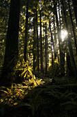 Cathedral Grove, MacMillan Provincial Park, British Columbia, Canada