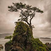 A tree stands alone on a rocky hill top along the shores of Haida Gwaii, Haida Gwaii, British Columbia, Canada
