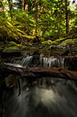 Small stream flows over a waterfall in the lush rainforest, Haida Gwaii, British Columbia, Canada