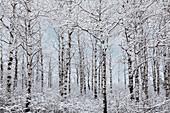 Winter wonderland landscape, Thunder Bay, Ontario, Canada