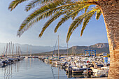 Harbour of Calvi, Corsica, Southern France, France, Southern Europe