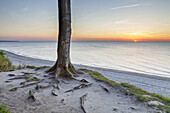 Beech forest in Nienhagen, Baltic Sea Coast, Mecklenburg-Western Pomerania, Northern Germany, Germany, Europe