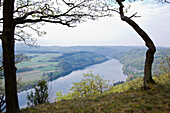 View of Lake Edersee from Kahle Hard Route viewpoint near Bringhausen in Kellerwald-Edersee National Park with sessile oak tree (Quercus petraea) Lake Edersee, Hesse, Germany, Europe