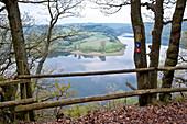 View of Lake Edersee from Knoreichensteig with oak trees (Quercus petraea) viewpoint near Bringhausen in Kellerwald-Edersee National Park, Lake Edersee, Hesse, Germany, Europe