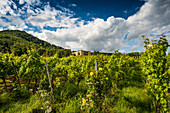 Villa Ludwigshöhe and vine yards, Rhodt unter Rietburg, German Wine Route or Southern Wine Route, Palatinate, Rhineland-Palatinate, Germany