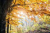 Forest on a wonderful autumn day, Allgaeu, Bavaria, Germany
