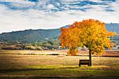 Bench under autumn tree in field