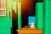 Cat sitting in sunny green doorway
