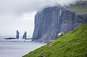 Schafe auf einem steilen grün bewachsenem Hang, Färöer Inseln