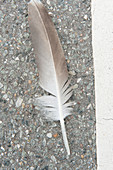 close up of a feather from a bird on a road