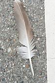 close up einer Vogelfeder auf der Straße