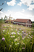wild flowers inn the meadow in front of a barn, Marbacka, Sunne, Varmland, Sweden