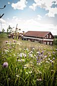 Wildblumen auf einer Wiese vor der Scheune auf Marbacka, Gemeinde Sunne, Värmland, Schweden