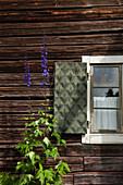 Detailansicht eines Fensters in einem alten Holzhaus im Heimatmuseum Gammelgarden in Rättvik, Dalarna, Schweden
