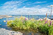 Sicht vom Ufer über bunte Wildblumen auf Sommerhimmel und Meer, Öregrund, Bottensee, Uppsala, Schweden