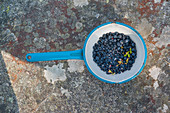 blueberries collected in a blue enamel pot standing on a rock in Gavle bay, Gavleborgs Ian, Sweden