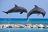 Two jumping dolphins at Dolpin Lagoon of Half Moon Resort Rose Hall, near Montego Bay, Saint James, Jamaica