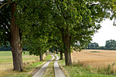 avenue of trees, country path, Mecklenburg-Vorpommern, Germany