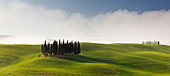 Tuscan hills of the Val d'Orcia with cypress grove in the morning sun in spring, San Quirico d'Orcia, Tuscany, Italy