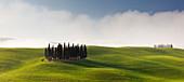 Toskanische Hügellandschaft des Val d'Orcia mit Zypressenhain in der Morgensonne im Frühling, San Quirico d'Orcia, Toskana, Italien