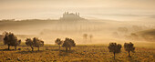 Panorama of tuscan landscape with a villa and cypress trees in the morning mist and sun, pasture with poppies and olive trees in the foreground, San Quirico d'Orcia, Val d'Orcia, Siena Province, Tuscany, Italy