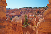 Queens Garden Trail , Bryce Amphitheater , Bryce Canyon National Park , Utah , U.S.A. , Amerika