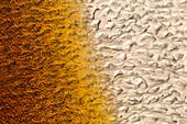 tannin water patterns, sand on beach, pristine beach, high format, sea foam, graphic, muster, two-tone, nobody, Stewart Island, New Zealand