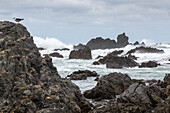 Owhiro Bay, south of Wellington, rough seas of Cook Strait, South Island, New Zealand