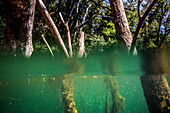 River landscape with tree trunks, partially underwater, summer, river Orb, Roquebrun, southern France