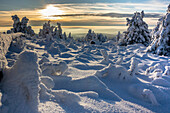 Winter landscape in the evening, Schierke, Brocken, Harz, Harz national park, Saxony, Germany
