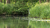 River Landscape with heron, Biosphere Reserve, Cultivated Land, Meadow, Trees, Spreewald, Brandenburg, Germany