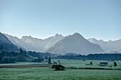 Bergpanorama bei Sonenaufgang in Herbst, Frost, Kuhweide, Oberstdorf, Rubihorn, Oberallgäu, Oberstdorf, Alpen, Deutschland