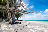 Weißer Sand und türkisfarbenes Wasser am Strand von Laura (Lowrah), Majuro Atoll, Majuro, Marshall Inseln, Südpazifik