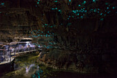 Glow worms in Waitomo Caves, Waikato Region, North Island, New Zealand, Pacific
