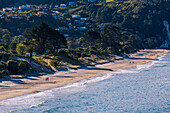Hahei beach on the eastern side of the Coromandel Peninsula bathed in late afternoon light, Waikato, North Island, New Zealand, Pacific