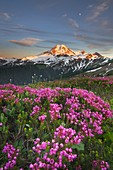 Mount Baker seen from wildflowers meadows on Skyline Divide, Mount Baker Wilderness North Cascades Washington.