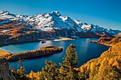 Switzerland, Engadine, Sils lake, at Silvaplana lake, in autumn. Margna peak,snowy.
