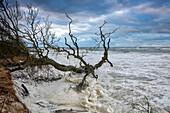 Sturm flood water on Weststrand beach, Darss, Baltic sea coast, Mecklenburg Vorpommern
