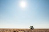 The blazing sun above the Etosha Pan in the Etosha National Park, Namibia, Africa