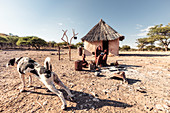 Himba woman cooking corn porridge in front of her hut, for herself and her child, Kunene, Namibia