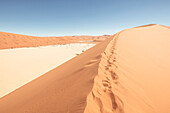 Ascent to the Big Daddy Dune, at 380 meters one of the worlds tallest dunes, near the Deadvlei clay pan, Sossusvlei, Namib Naukluft National Park, Hardap, Namibia, Africa