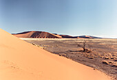 Tree skeleton near Dune 45, Sossusvlei, Namib Naukluft National Park, Hardap, Namibia, Africa.