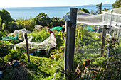 vegetable garden, self sufficient property, food growers, gardening, sustainable, Golden Bay, Tasman District, South Island, New Zealand